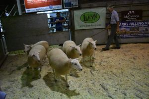 Brecon 2018 - HM Wells sells 1st prize shearling ewes £270.JPG