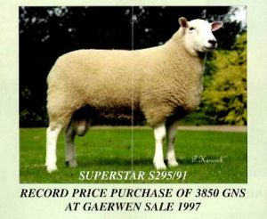 1997 - Purchased by NH & PM Paseley Record Price 3850 gns Gaerwen sale.JPG