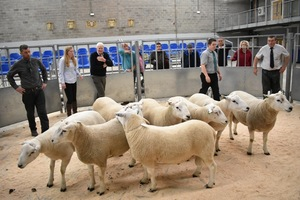 Stirling 2018 - Judging the rams.JPG