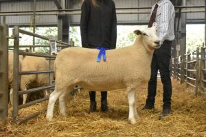 Exeter 2019 - 1st Prize Individual Ewe from SE Hughes - £200.JPG