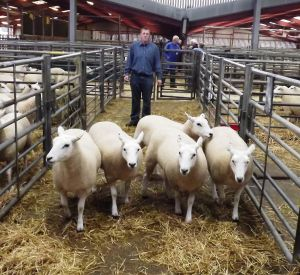 Carlisle 2014 - JK Goldie sells 3rd prize shearling ewes at £300.jpg