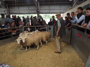 Exeter 2016 - Peter Honey sells Mrs Sayers ewe lambs as part of disperal for £120.JPG