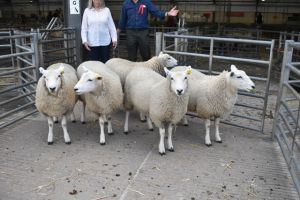 Exeter 2019 - 1st Prize ewe Lambs - AT & CM West £108.JPG