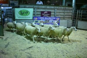 Brecon 2018 - ST Morris sells a ring for os shearling ewes for £150.JPG