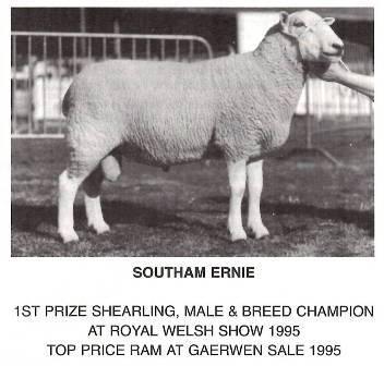 Lleyn Sheep Society :: History of the Society upto 2020 by H Stoney-Grayshon