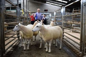 Ballymena 2018 - 2nd Prize Shearling Ewes from RJ Johnston - £240.JPG