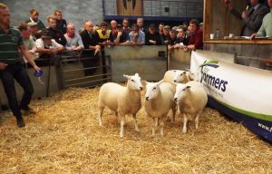 Carmarthen 2015 - WJ & DJ Williams second prize shearling ewes sell for £165.jpg