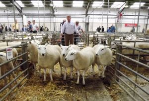 Exeter 2017 - Champion Females & 1st Prize Shlg Ewes - A Selway - £165.JPG