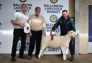 Ballymena 2018 - 1st Prize Aged Ram - J Coulter.JPG