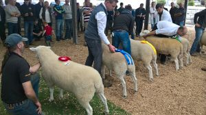 Roscommon Ram prize line up.jpg