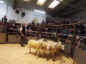 Ruthin 2016 - HM Wells sell shearlings to £200.JPG