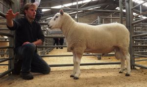 Stirling 2016 - Top priced ram from R Johnston & Sons - 800gns.JPG