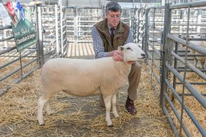 First prize Shearling Ewe from JA and R Geldard & Sons  sold for £400