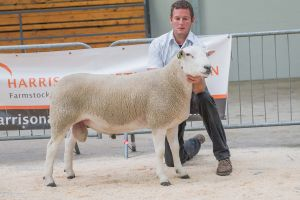 Lot 127 Overall Champion from JA and R Geldard & Sons  sold for 1200 gns