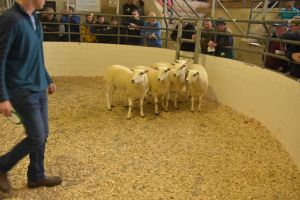 Roscommon 2019 - C & H Long sells 4th prize shearling ewes at 200 euro.JPG