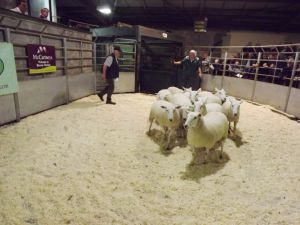 Brecon 2017 - Llew Thomas sells shearling ewes to £135.JPG