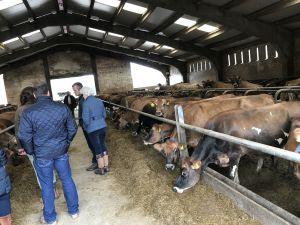 AGM 2017 - Grahams farm - Jersey cattle.JPG