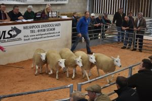 Welshpool 2018 - T & B Fort sell 1st prize shearling ewes £250.JPG