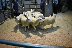 Ruthin 2018 - John George sells 3rd prize pen of 10 shearling ewes for £142.JPG