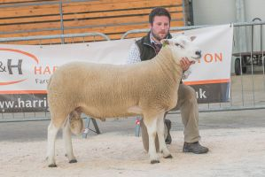 Lot 75 from B Walling sold for 7000 gns.jpg