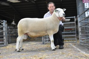 Exeter 2019 - Champion Ram AW Davies 1650gns.JPG