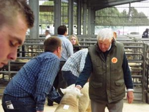 Carlisle 2014 - Judge Dai Morris inspects the rams.jpg