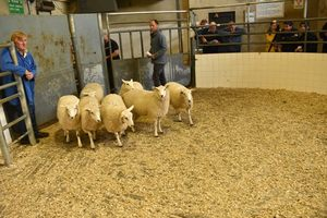 Roscommon 2019 - S Brown sells ewe lambs to 95 euro.JPG