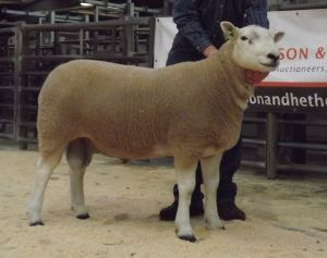 Carlisle 2014 - Champion Ram JK Goldie Lot 118 sold for 2500gns.jpg