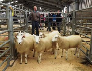 Stirling 2016 - 1st prize Ewe Lambs - JR Graham & Partners - £110.JPG