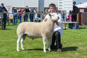 RHS 2018 - Overall Champion Lleyn Sheep from T & I Walling