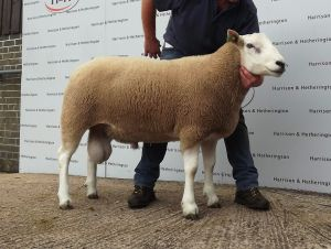 Carlisle 2014 - H Goldie lot 46 3800gns.jpg