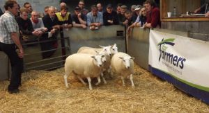 Carmarthen 2015 - AW Davies third prize shearling ewes sell at £165.jpg