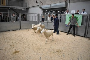 Stirling 2018 - D & B Henderson sells 2nd Prize shearling ewes at £140.JPG