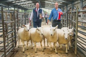 Champion and first prize pen of gimmers - JK Goldie - £400.jpg