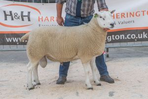 Lot 28 from David Knowles sold for 3000 gns.jpg