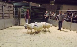 Brecon 2017 - WJ & DJ Williams sells 2nd prize shearling ewes £174.JPG