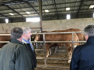 AGM 2017 - Members view the Limousin bulls.JPG