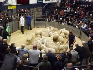 Carlisle 2014 - A busy ring.jpg