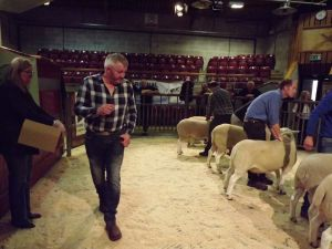 Skipton 2016 - Judge John Morton studies the rams.JPG