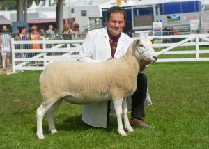 GYS 2019 - First Prize Shearling Ewe & Overall Reserve Champion - AW Davies.jpg