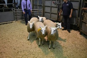 Ruthin 2018 - IO & A Jones sells 3rd prize ewe lambs at £86.JPG