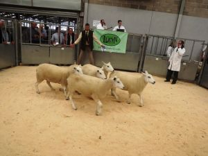 Stirling 2016 - JA & R Geldard sells 2nd prize shearling ewes - £270.JPG
