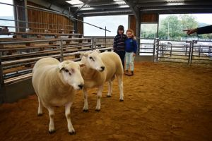 Welshpool 2018 - Megan & Manon Jones with their Family's top priced rams.JPG