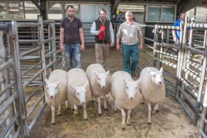 First prize pen of Ewe ;ambs from B Walling sold for £230/head