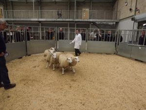 Stirling 2017 - R & S Turnbull sells 2nd prize ewe lambs at £85.JPG