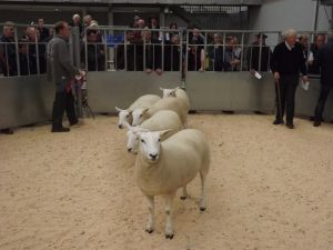 Stirling 2015 - Hamish Goldie sells champion pen of shearling ewes £380.jpg