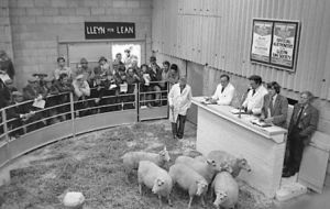 First Lleyn Sheep Sale in Gaerwen (2).jpg