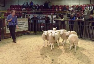 Skipton 2016 - H Goldie sells 2nd prize pen of shearling ewes - £145.JPG