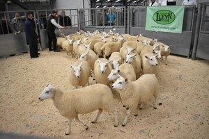Stirling 2018 - T & I Walling sell 45 ewe lambs at top price £90.JPG