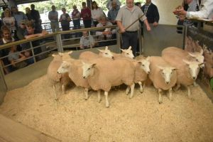 Exeter 2019 - C Price sells ewe lambs for £100.JPG